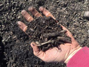 Natural Black Mulch
